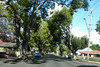 21/06/2014 - Hume Street in Toowoomba. Look at the trees growing in the road.