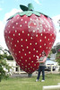 01/03/2014 - The Big Strawberry, Koonoomoo, Victoria
