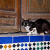 Cat, medina of Marrakech, Morocco