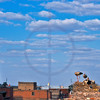 Storks nesting and part of the skyline of Marrakesh, Morocco