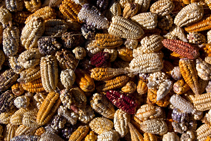 Dried corn cobs, Peru