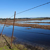 King Tides, Elkhorn Slough