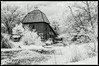 The Birdsong at Red Oak II