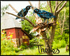 """The Theives""  sculpture by Lowell Davis at Red Oak II"