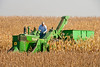 Ear Corn Picker 3 Se_MRL9095