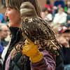 In March I attended the International Festival of Owls in Houston, Minnesota.  One of the sessions featured live owls.  The session was held in a gymnasium and the light was dim, so I had my camera set at a very low speed (1/20th of a second).  Just as I clicked the shutter, this Short-eared Owl spun its head around.  I'm amazed that the owl's body stayed in focus; apparently the body didn't move when the head turned.  Perhaps one of the owl experts on my list can add a comment below to explain this (Karla??)