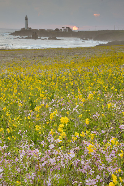 Wildflower sunset at Pigeon Point