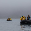 Zodiacs at sea, King penguins on land