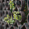 Plants growing through rusty railings in Venice