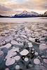 Bubbles on Abraham Lake