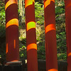 Torii and forest