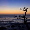 after sunset on 17-mile drive<br /> Pebble beach, California