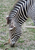 It's hard to walk past a Zebra without taking a picture. These animals are natural black and white point test patterns.