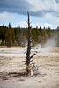 Upper Geyser Basin, Yellowstone NP