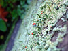 Lichen growing on a plank of the wooden fence