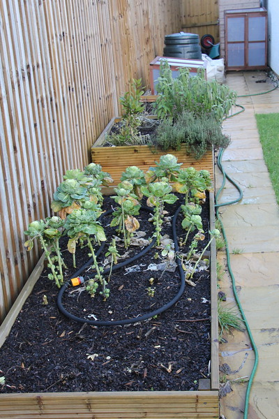 Vegetable and Herb Beds.<br /> 24 January 2015