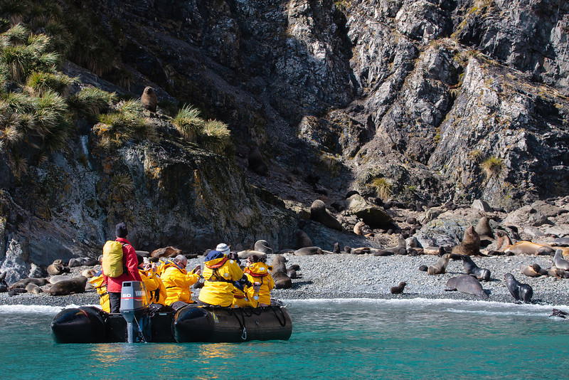 Zodiac cruise to observe fur seals and penguins on beach at Elsehul, South Georgia
