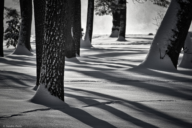 3-6-15: shadows in the morning, at Wildwood