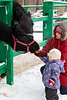 Young woman with a little girl feeding a horse with carrot