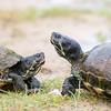 turtles feedign on the beach