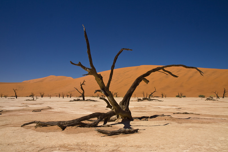 Surreal landscape of twisted dead trees on salt pan with red sand dunes behind, Dead Vlei, Sossusvlei, Namib Desert, Namibia