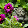 6-17-15: gnome in the dahlias