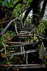#413 Stairway to Buddhist monastery in the jungle, Arunachal Pradesh state, Northeast India