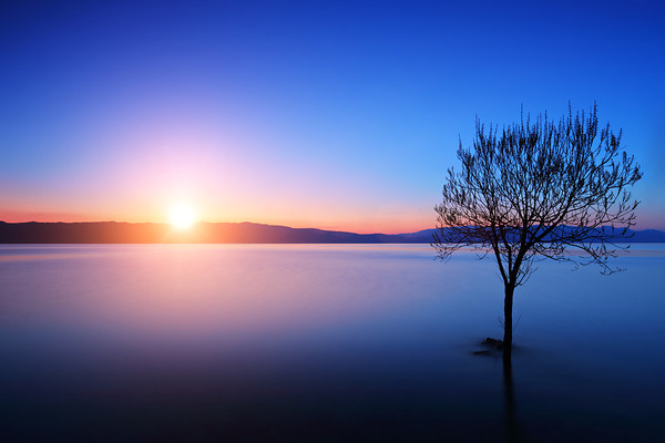 Tree in Ohrid lake, Macedonia at sunset