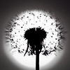 'Dandelion Halo' - a shot from my back garden, I used the sun to form a halo around this dandelion.