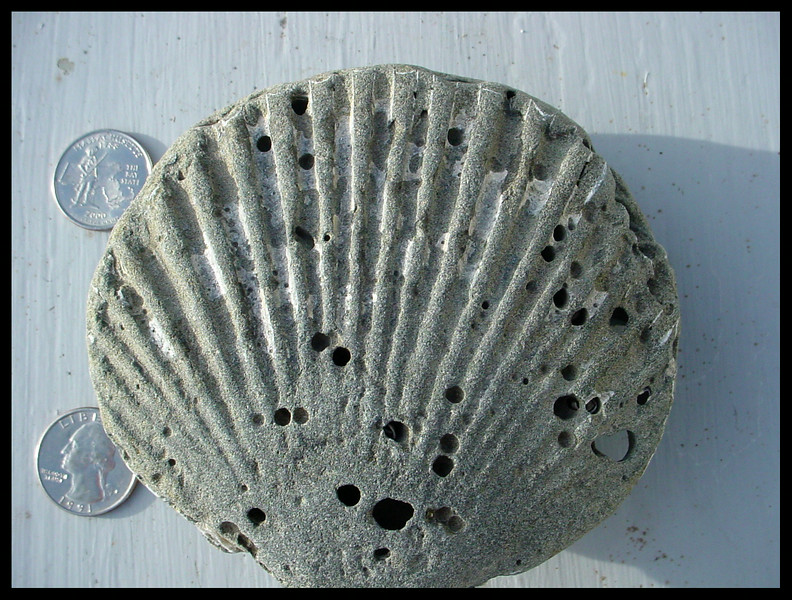 Shell Fossil Rock from Bullards Beach State Park