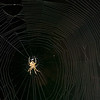 This spider decided to spin a huge beautiful web that unfortunately blocked an entire doorway.