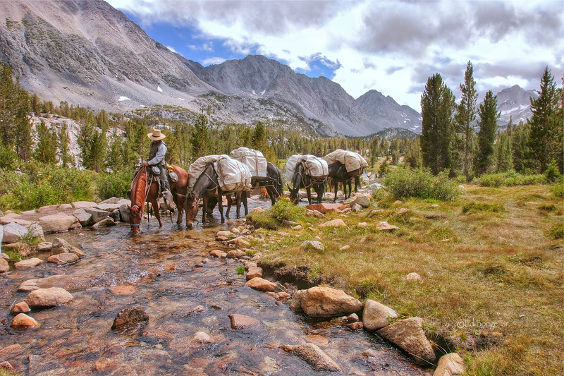 Horse and pack mules, take a water break before continuing their journey through Little Lakes Valley, California. Above 10,000 ft., this stream feeds Heart Lake, a popular hiking destination less than two miles from the Mosquito Flats trail head.
