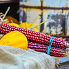 indian decorative corn on farm display