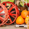 pumpkins next to an old farm tractor