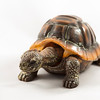 Realistic toy turtle isolated on white background