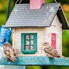 bird feeders. tree house for the birds,