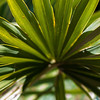 Close up photo of green palm tree leaf