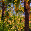 Tropical forest, palm trees in sunlight