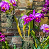 purple orchids with cultured stone background
