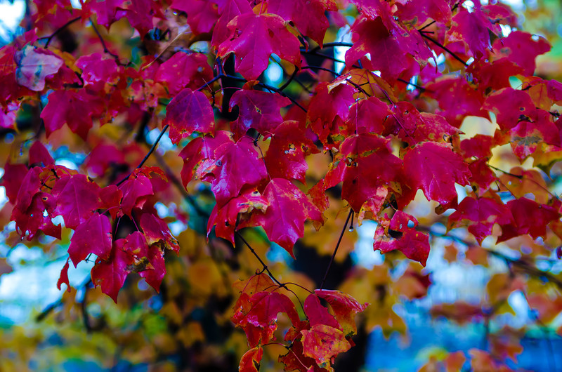 red leaves during autumn