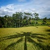 Ubud Palm Tree Shadow