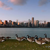Chicago | USA Cityscape with ducks in the foreground, by the Michigan lake