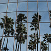 California Palm Trees...Dancing in the Mirror