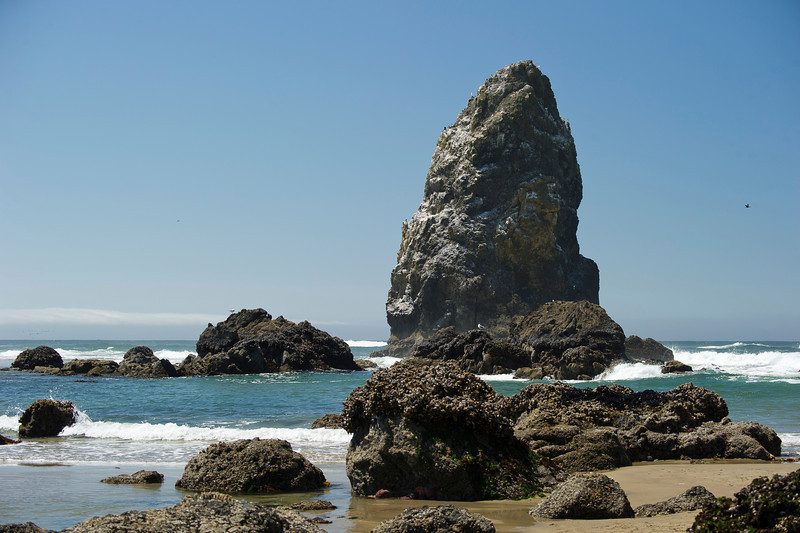 "One of the Basalt ""Needles"", adjacent to Haystack Rock."