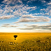 Sunrise balloon ride in the Masai Mara, Kenya