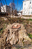 A teddy-bear head on a stump in my neighborhoot..   Looks like some sort of creepy sacrificial altar, but maybe that's just me.