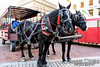 Horse and wagon rides in Monument Square