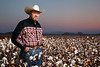 Portrait of Farmer/Cowboy in Cotton Field