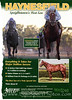 Airdrie Stud ad in Blood-Horse 11.02.13.
