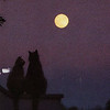 Quint Buchholz: Vollmond (Full Moon)